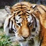 Detroit Tiger Art Print