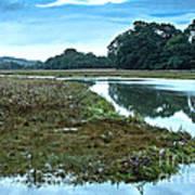 Devoran River Art Print