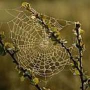Dew Highlights An Orb-weaver Spiders Art Print