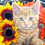 Di Milo - Sun Flower Kitten With Blue Eyes - Kitty Cat In Fall Autumn Colors With Gerbera Flowers Art Print
