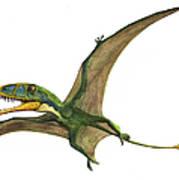 Dimorphodon Macronyx, A Prehistoric Era Art Print