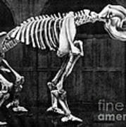 Diprotodon, Cenozoic Mammal Art Print