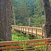 Discovery Trail Bridge Art Print
