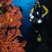 Diver And Sea Fans, Fiji Art Print