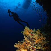 Diver And Soft Coral, Fiji Art Print