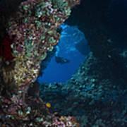 Diver At Boo Windows In Raja Ampat Art Print