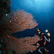 Diver By Sea Fans, Indonesia Art Print