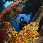 Diver Explores The Liberty Wreck, Bali Art Print