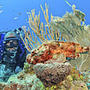 Diver Looks At Scorpionfish Art Print