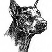 Doberman-pincher-portrait Art Print