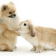Dog And Rabbit Art Print