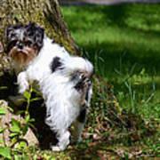 Dog And Tree Art Print