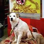 Dog At Carnival Art Print