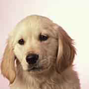 Dog, Close-up Art Print