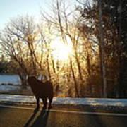 Dog In Morning Sun Art Print