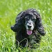 Dog On The Grass Art Print