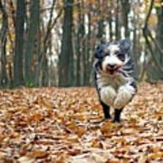 Dog Running In Forest Art Print