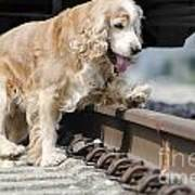 Dog Walking Over Railroad Tracks Art Print