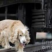 Dog Walking Under A Train Wagon Art Print