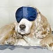 Dog With A Sleep Mask Art Print