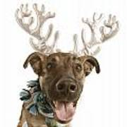 Dog With Antlers Art Print