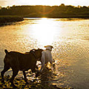 Dogs At Sunset Art Print by Stephanie McDowell
