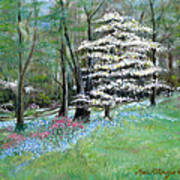 Dogwood In Springtime Art Print by Max Mckenzie