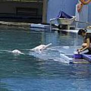 Dolphin And Trainer At The Underwater World In Sentosa In Singap Art Print