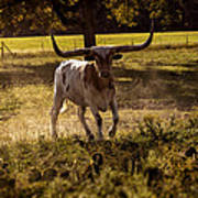 Don't Mess With Texas ..... Long Horns That Is  Art Print