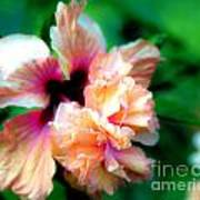 Double Peach Hibiscus Five Art Print