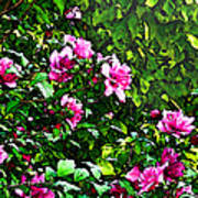 Double Rose Of Sharon Art Print