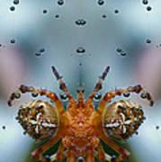 Double Spider Art Print