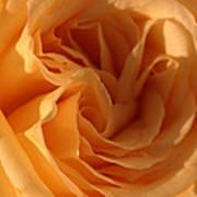 Double Yellow Rose Art Print