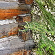 Dovetail Log Construction Art Print