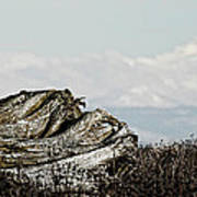 Dozing With Mount Baker Art Print