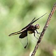 Dragonfly - Yellow Stripe Art Print