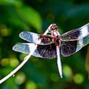 Dragonfly 0002 Art Print