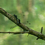 Dragonfly Hanky Panky Art Print