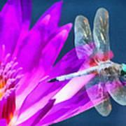 Dragonfly Lily Art Print