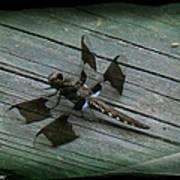 Common Whitetail Dragonfly Art Print