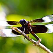 Dragonfly Stalking Art Print