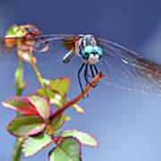 Dragonfly Visit Art Print