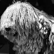 Dreadlock Dog Art Print