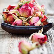 Dried Rose Buds Art Print