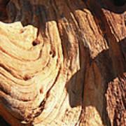 Driftwood 1 Art Print