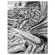 Driftwood Black Cat Art Print