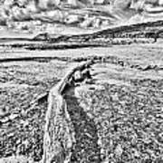 Driftwood Sketch Art Print