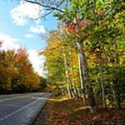 Driving Though The Birches Art Print