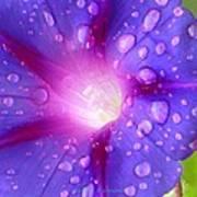 Droplets Glory Art Print
