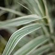 Drops Of Grass Symmetry Art Print